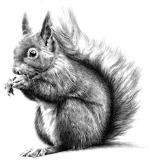 A grayscale image of a red squirrel for Red Squirrel Cottage